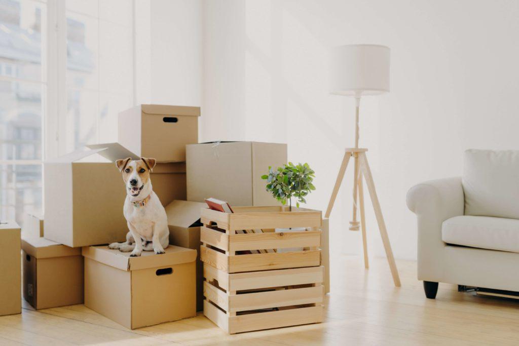 Ein Hund sitz auf einem Stapel Umzugskartons in einem fast leeren Raum